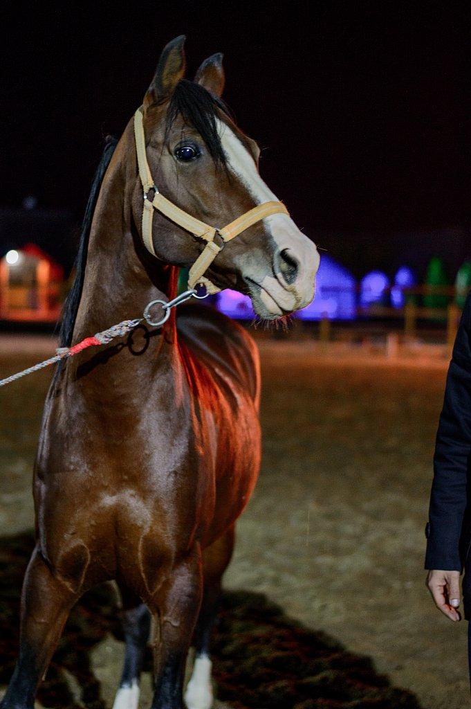 The chosen horse