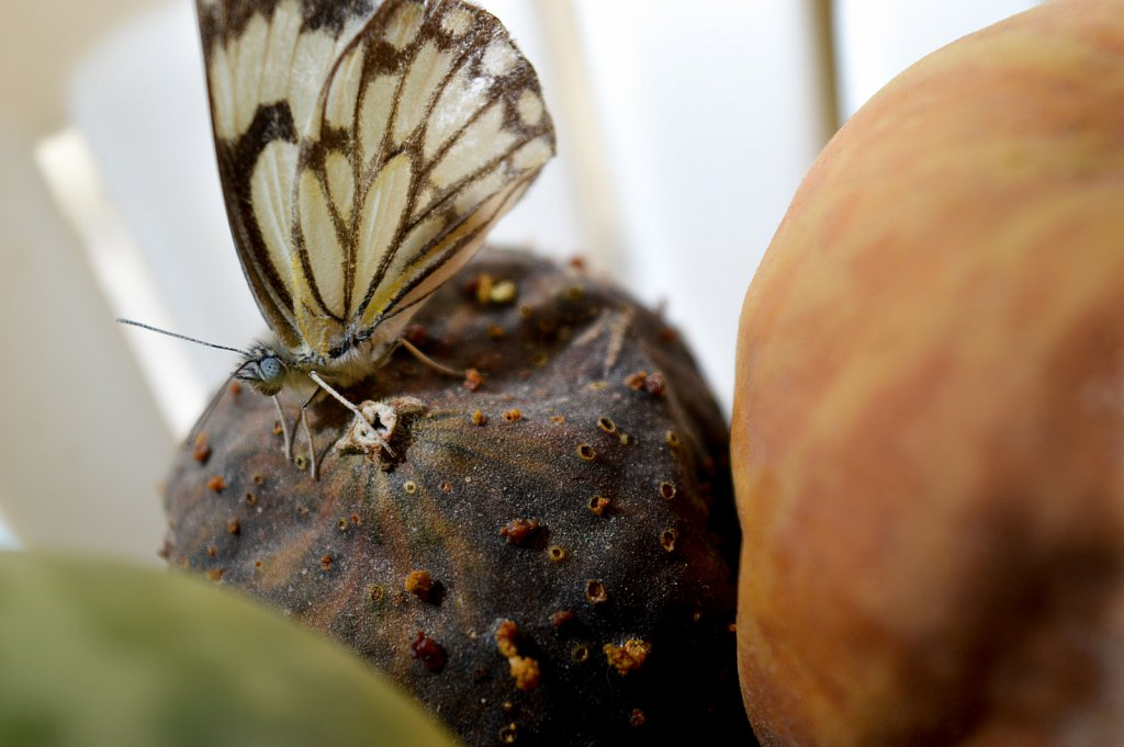 The Butterfly and the deadly watermellon