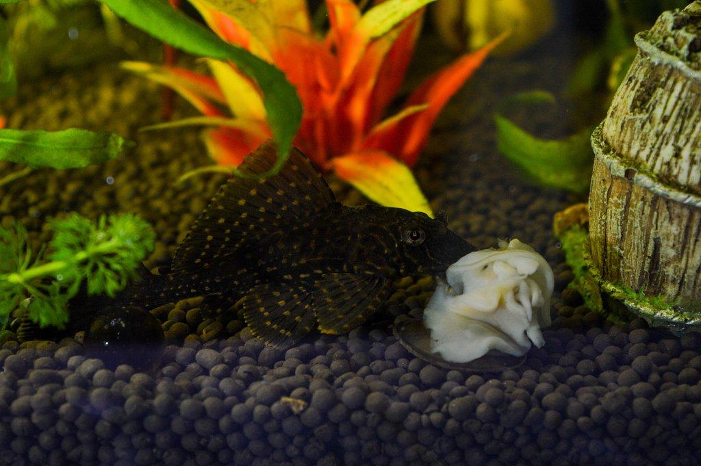 Snail Eater