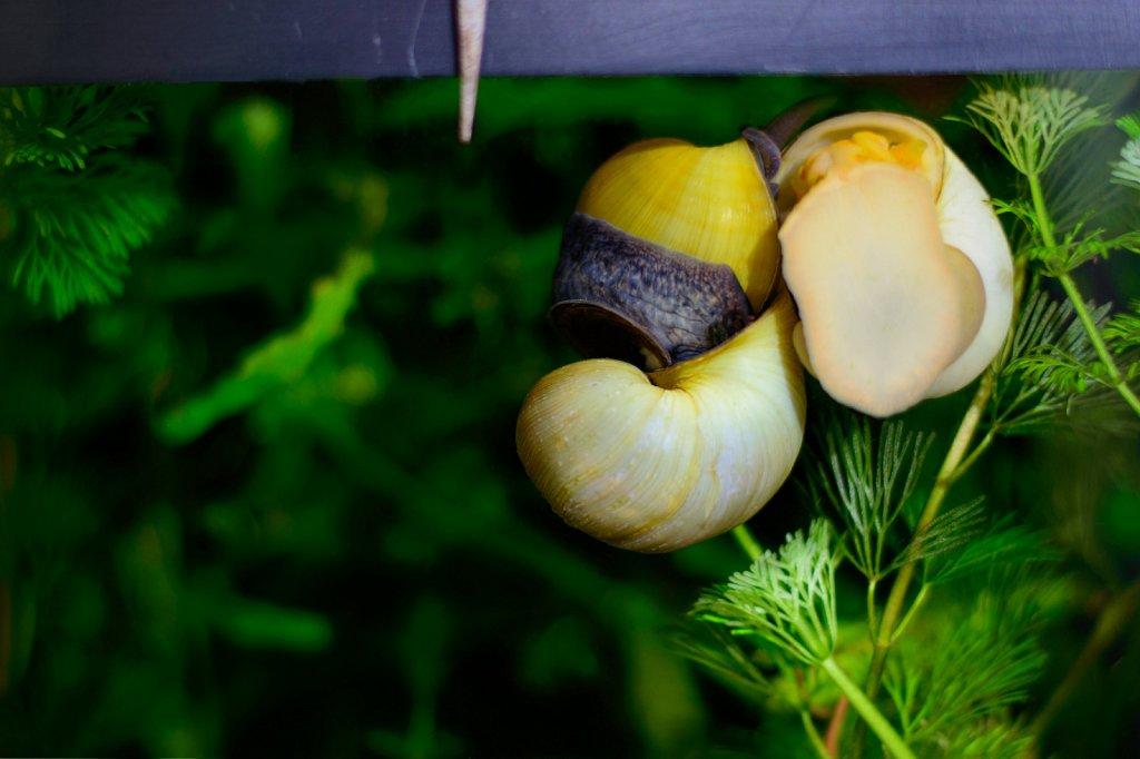 Joyful Snails