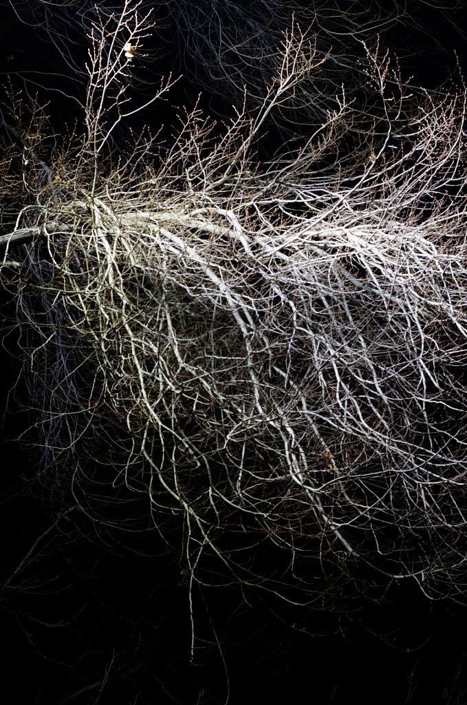 White-Tree.jpg